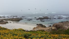 Asilomar Grounds, USA - 2016, during the BCI Meeting